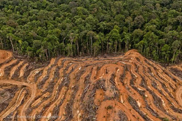 Refleksi 2020: Tahun Kekalahan Lingkungan
