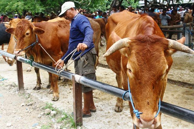 Mentan 'Disemprot' DPR  Soal Daging dan Kedelai!
