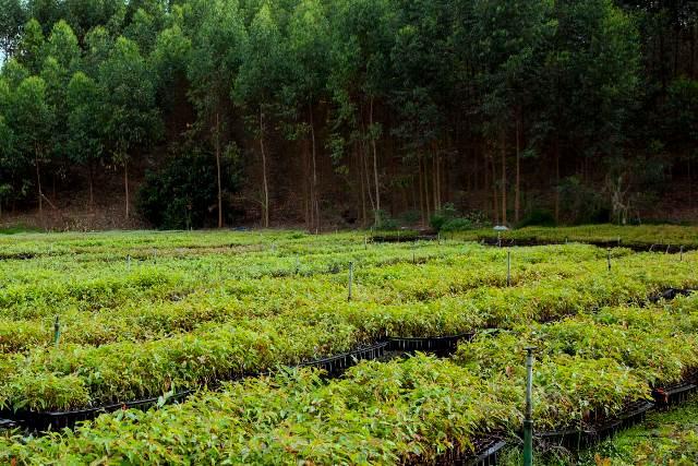 TPL Jawab Pemberitaan LSM yang Tuding Toba Pulp Lestari Lakukan Kerusakan Lingkungan