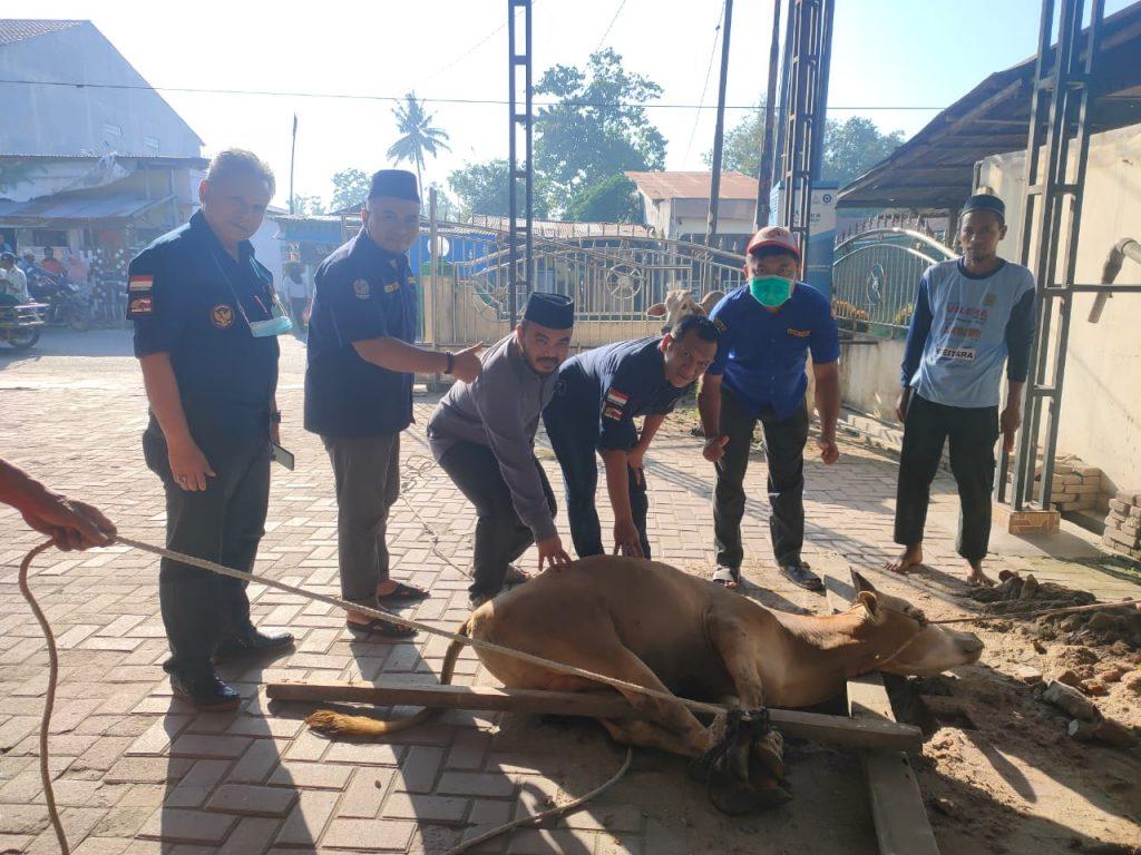 Wakili Ijeck, Karang Taruna Sumut Serahkan Sapi Kurban Kepada Masjid At-Taqwa Kecamatan Beringin
