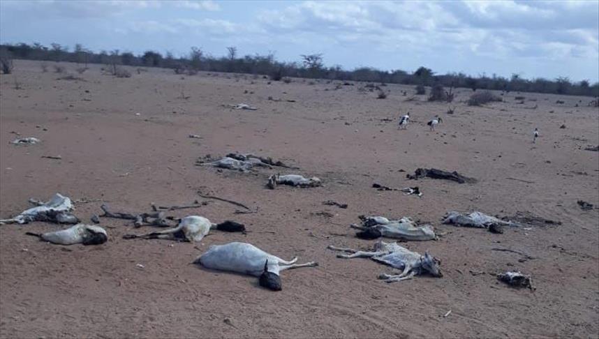 'Kekeringan lebih berbahaya daripada pandemi Covid-19 di Kenya'